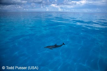 Dolphin by Todd Pusser